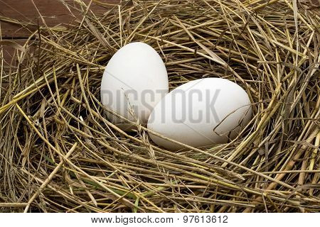 Two Goose Eggs Lie In A Nest Of Hay