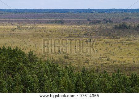 Bog Area Aerial View