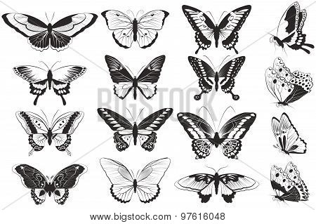 set of Black and white realistic butterflies