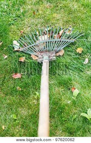 Cleaning Lawn By Rake