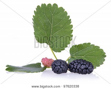 Ripe Mulberry With Leaves