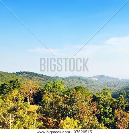 Beautiful Tropic Landscape