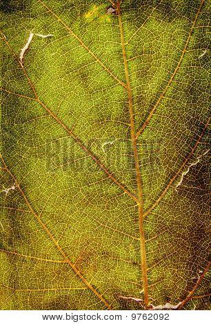 textura de planta do grunge