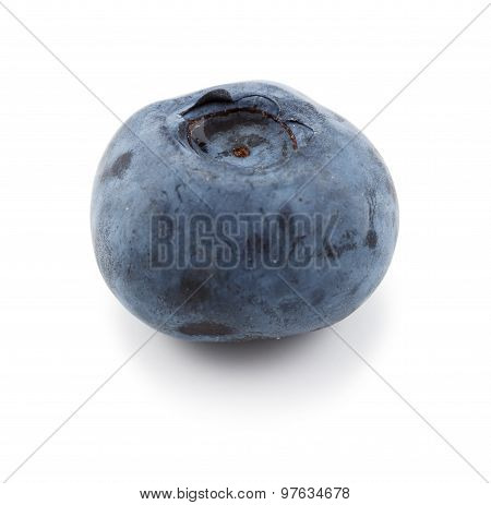 One single blueberry against a white background