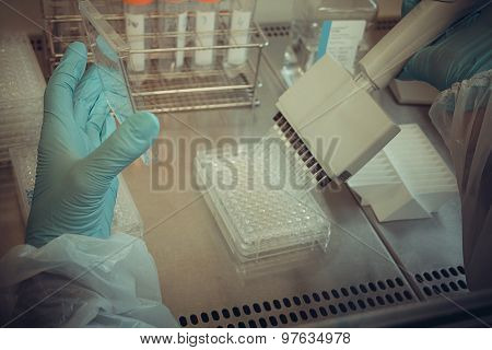 Laboratory Technician Working With Multiwell Pipette