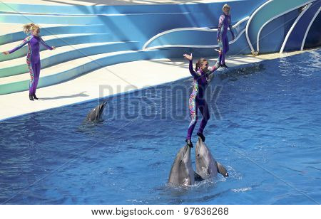 A Dolphin Days Show Entertains Visitors At Dolphin Stadium