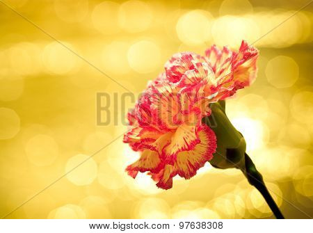 Flower On A Bright Background With Glare.