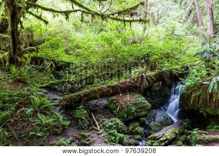 Serene Waterfall In The Forest