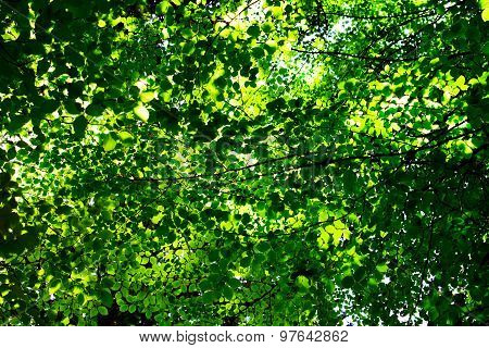 Leaves And Foliage Background