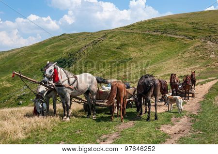 Travelling Gypsy camp with horse and wagon