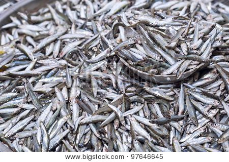Fresh Anchovies Fish On Ice Exposition At The Seafood Market In Thailand