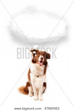 Cute brown and white border collie with empty cloud above his head
