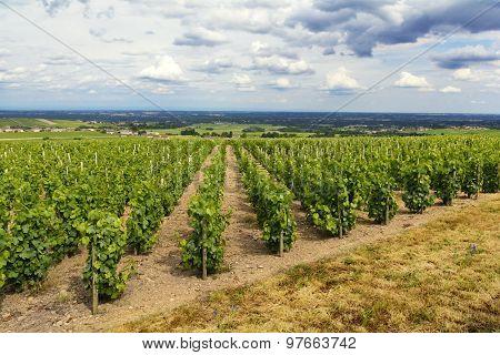 Vineyards Of Fleurie Village, Beaujolais, France