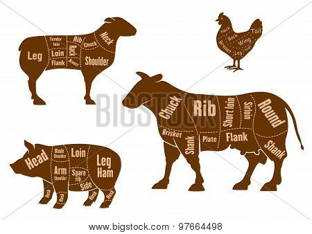 Chicken, pork, beef and lamb meat cuts scheme