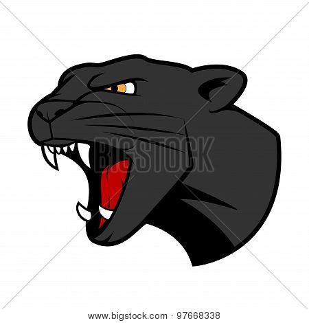 Puma head with bared teeth