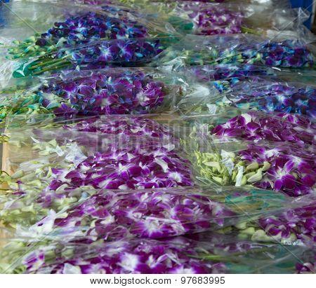 Orchids Bulk Sale