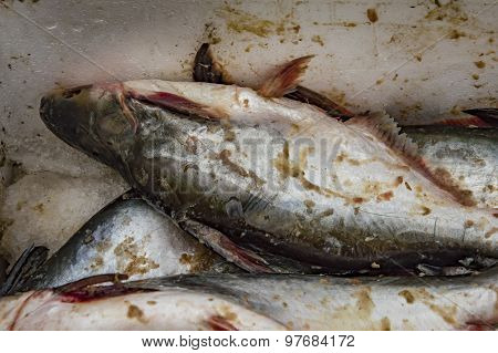 Fresh Fish In The Box