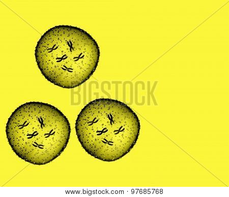 Three Microbe Yellow