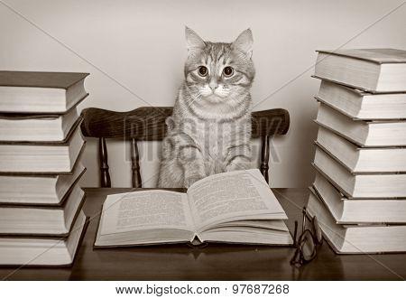 Beautiful Striped Cat And Books