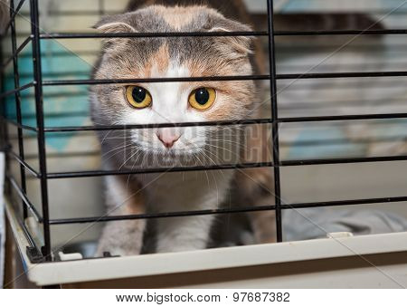 Beautiful Lop-eared Cat In A Cage Shelter