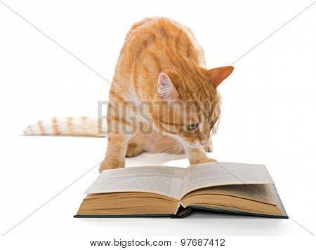 Big Red Cat Reading A Book