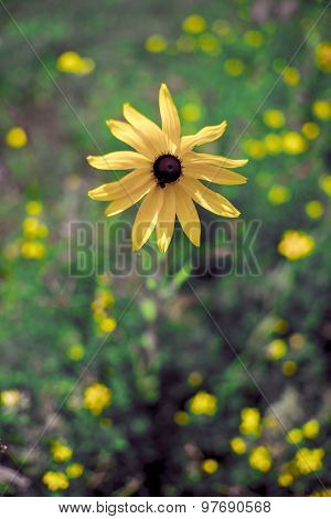 Abstract background with Yellow flower detail, shallow DOF