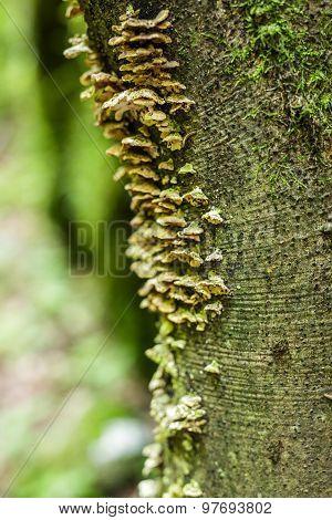 Macro Of A Mushrooms