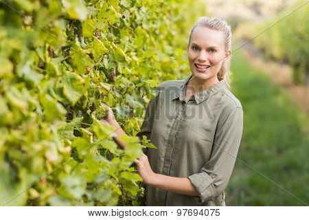 Young happy vintner smiling at camera in the grape field