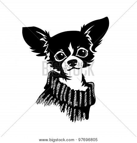 Chihuahua dog - vector illustration