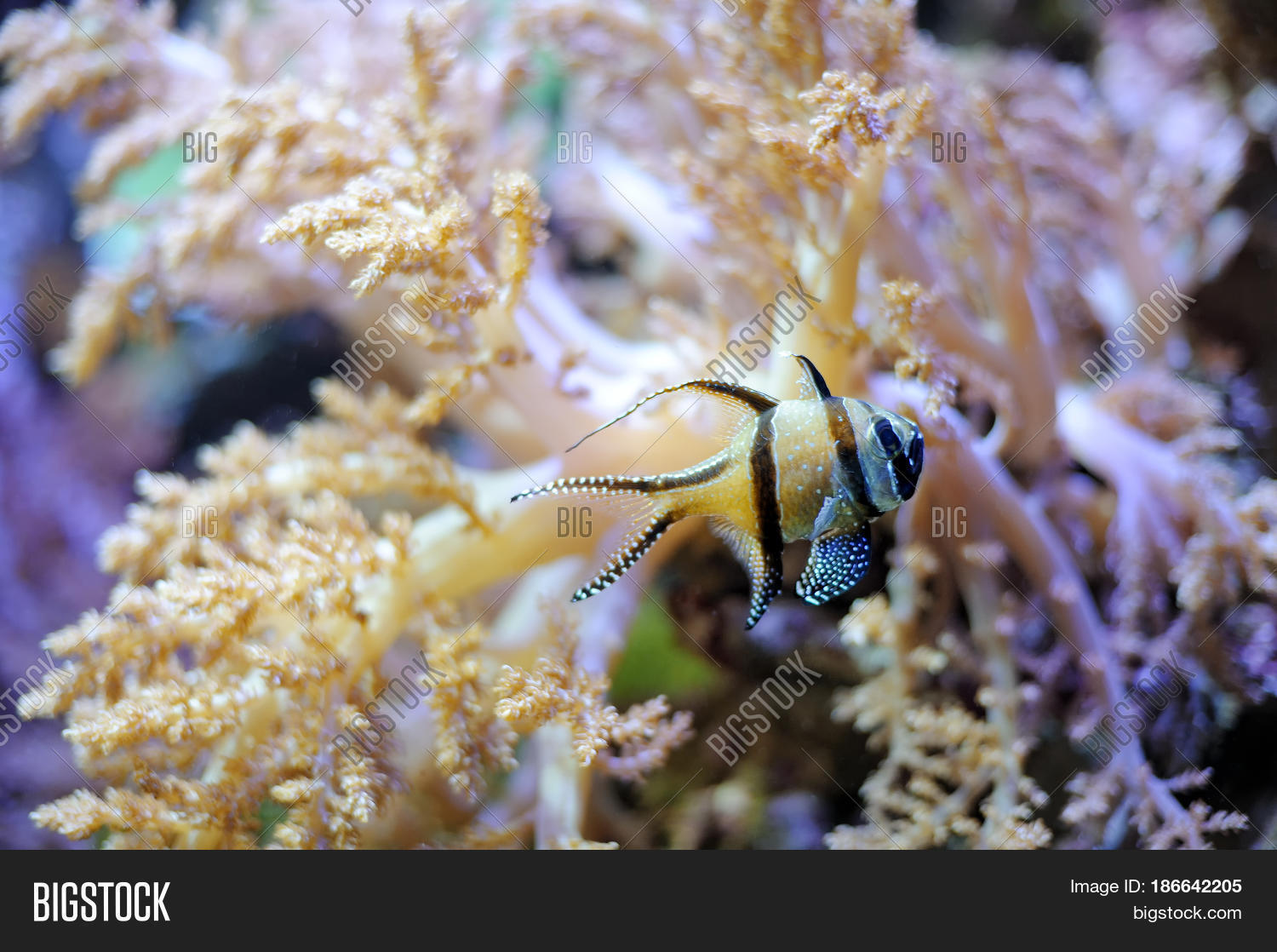 Tropical striped little fish image photo bigstock for Little fish swimming
