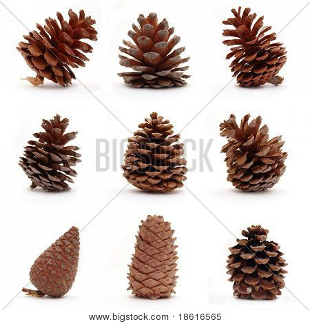 Set of nine different cones isolated on white background