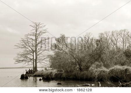 Swamp'S Edge