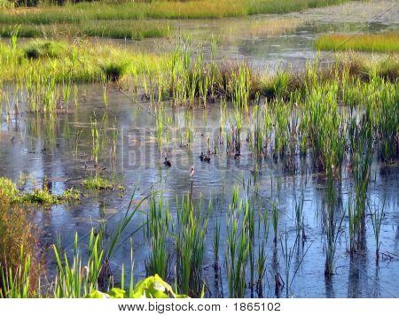 Wetlands 2