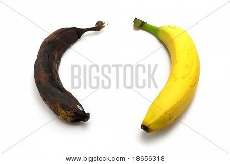 Rotten and fresh bananas. Element of design.
