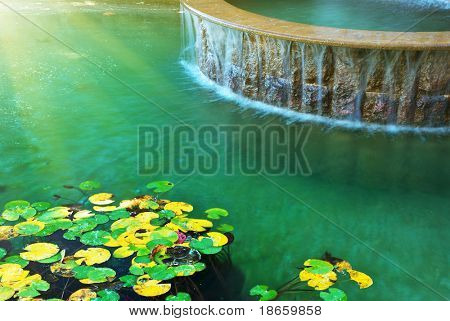 Water and leafs from water lily. Nature design.