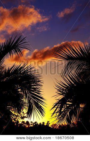 silueta de palmeras en la puesta de sol en el trópico
