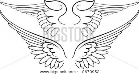Baroque Wings in Calligraphy Style. Vector Illustration.