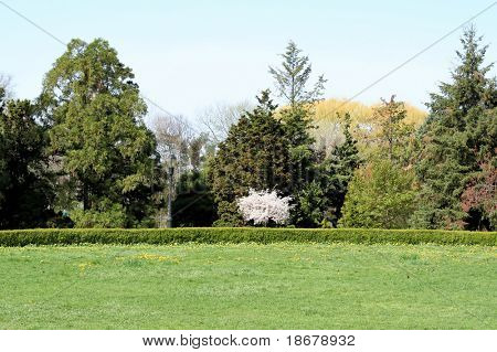 Garden Meadow in Spring