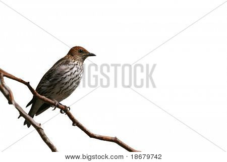 Isolated Desert bird