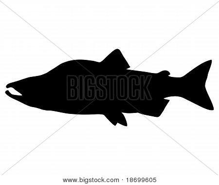 Salmon Silhouette