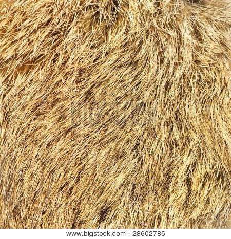 Wool background. Detail of rabbit fur