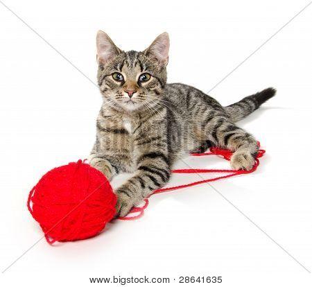 Nette Katze mit rote Kugel Garn