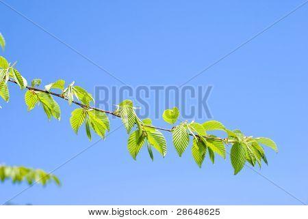 Bright fresh green leaves