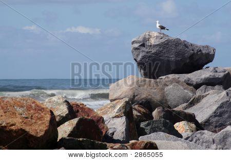 Rei das rochas