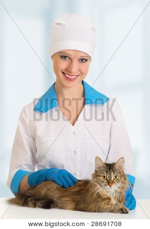 Cat On Examination By A Veterinarian