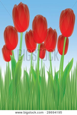 Tulips In The Grass