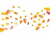 Oak, Maple, Wild Ash Rowan Leaves Vector, Autumn Foliage On White Background. Red Orange Yellow Rowa poster
