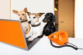 Team Or Couple Of Dogs  With Glasses As Secretary Or Operator With Red Old  Dial Telephone Or Retro  poster