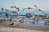 Flock Of Birds Seen Soaring High Above The The Sky In Anna Maria Island, Florida poster
