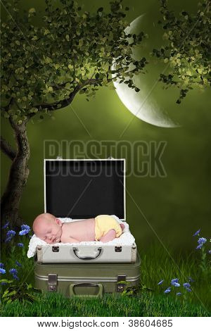 Little Baby boy in Suitcase, under tree in the mood light